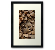 Nest of Bunnies #1 Framed Print