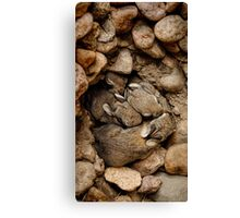Nest of Bunnies #1 Canvas Print