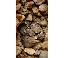 Nest of Bunnies #1 Photographic Print