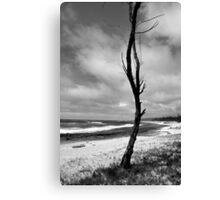 Barren Land Canvas Print
