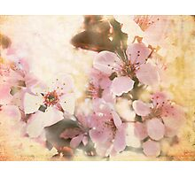 April Blossoms Photographic Print