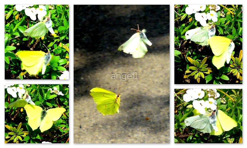 Large White Mating Dance by ©The Creative  Minds