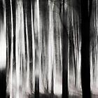 Waldlichter by Dorit Fuhg