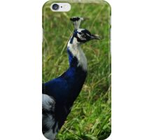 Peacock iPhone Case/Skin