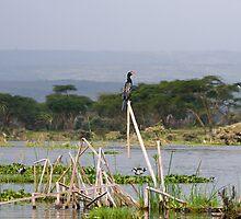 Lake Naivasha landscape by Valerija S.  Vlasov
