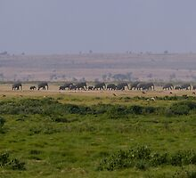 Elephant Family Landscape by Valerija S.  Vlasov