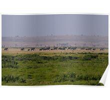 Elephant Family Landscape Poster