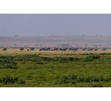Elephant Family Landscape Photographic Print