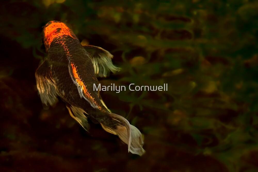 Butterfly by Marilyn Cornwell