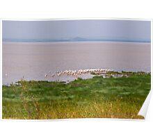Lake Manyara Landscape Poster