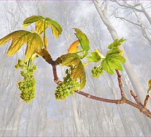 New Leaves and Catkins No.1 by J-images