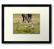 Egyptian Gooses Framed Print