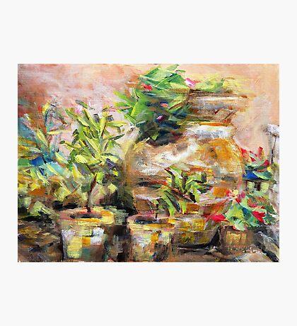 Garden Pots Photographic Print