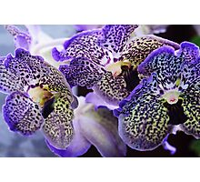 Aliens. Orchids from Keukenhof. Netherlands Photographic Print