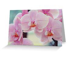 Pretty Elegance. Orchids from Keukenhof. Netherlands  Greeting Card