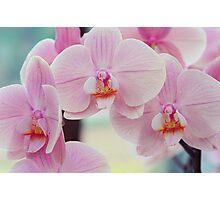 Pretty Elegance. Orchids from Keukenhof. Netherlands  Photographic Print