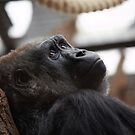 Female Gorilla by hannahelizabeth