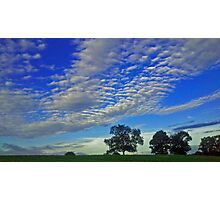 Sky & Tress Photographic Print