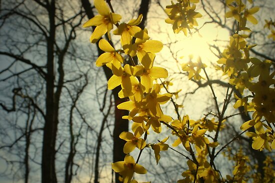 The Warmth of Spring by Barbara Gerstner