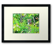 Tiger Cub in the Wood Framed Print