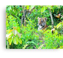 Tiger Cub in the Wood Canvas Print