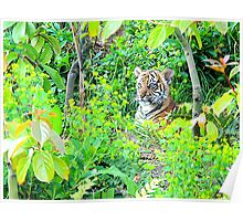 Tiger Cub in the Wood Poster