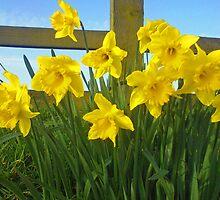 Daffodils cross by FairyGirl15