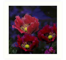 Night Poppies Art Print