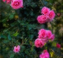 Climbing roses in a historic setting by Celeste Mookherjee