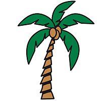 Palm tree coconut by Motiv-Lady