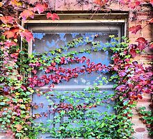 Autumnal Ivy Window by George Petrovsky