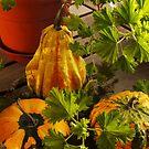 Autumn Gourds by Rae Tucker
