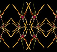 Reaching Spider Orchid Mirror Design Western Australia by Leonie Mac Lean