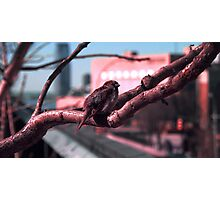 Sparrow on The High Line Photographic Print