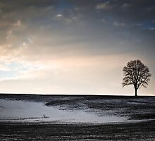 Lonesome Tree On A Hill III by David K. Sutton