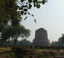 Deer park in Sarnath, India  by rani
