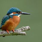 Kingfisher - I by Peter Wiggerman