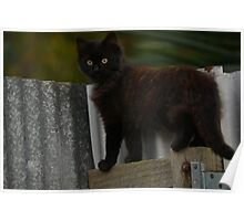 Phantom the little stray cat happy new life  Poster