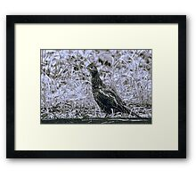 Partridge Across the Road Framed Print