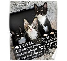 Kittens in a box Poster