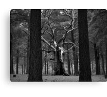 Scary Trees- Kuitpo Forest Canvas Print