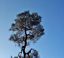 Golly Wog Tree by Digby