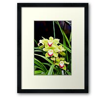 Green Orchids 1 Framed Print