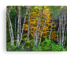 It's All About The Colors ~ Alder Trees ~ Canvas Print