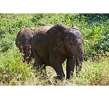 Mud Elephants Photographic Print