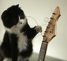 The musical cat! by GinasFineArt