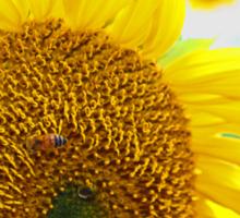 Sunflowers in the Sun Sticker