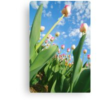 Pink and White Tulips 01 Canvas Print