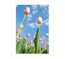 Pink and White Tulips 02 Art Print
