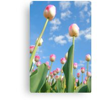Pink and White Tulips 02 Canvas Print